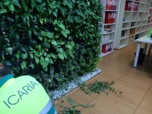 Mantenimiento jardín vertical