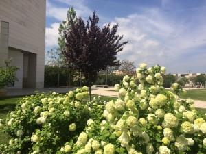 Plantaciones arbustivas